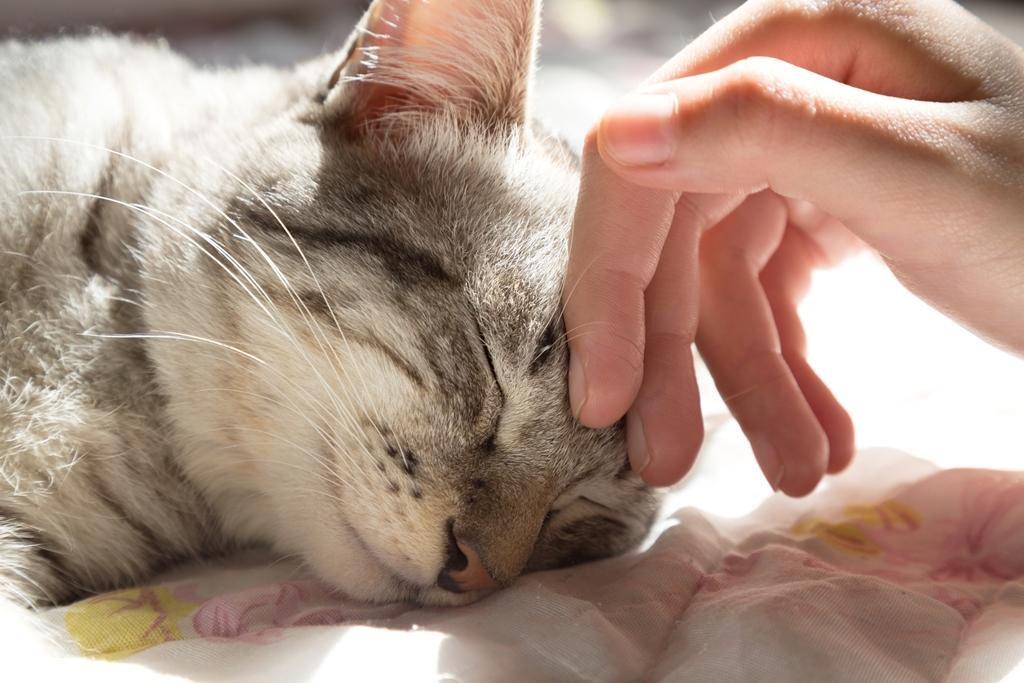 """Tiere als """"Pflegehelfer"""" – ungewöhnlich, aber mit positiven Effekten"""